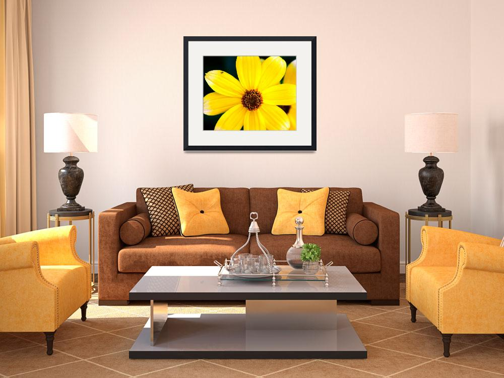"""""""1 Yellow Daisy&quot  (1997) by buffaloworks"""