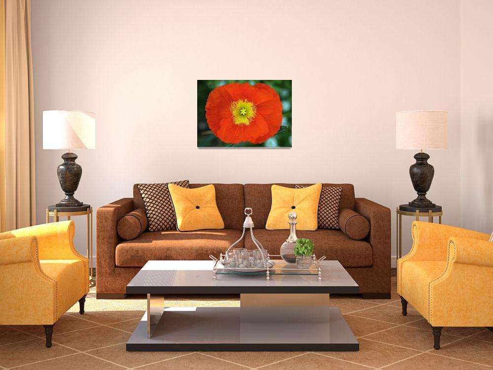 """Red Poppy""  (2008) by paulhood"
