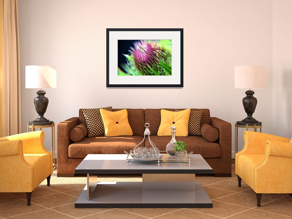 """""""Thistle Bloom&quot  (2009) by RTMacGowan"""