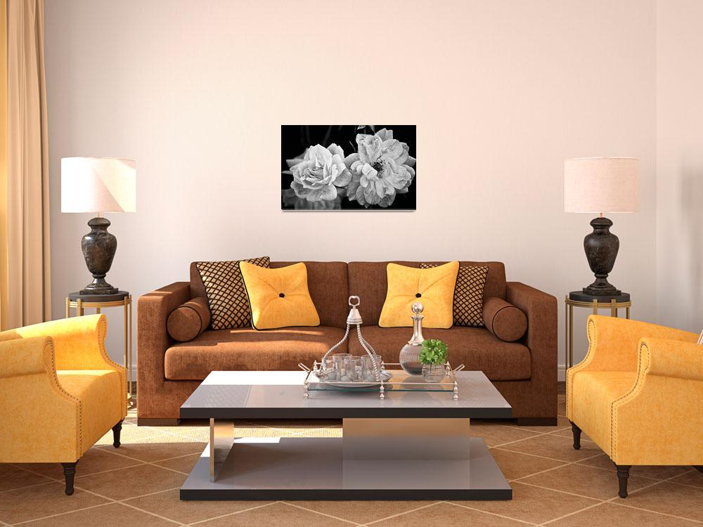"""""""Roses in Black and White&quot  (2012) by BrianKerls"""