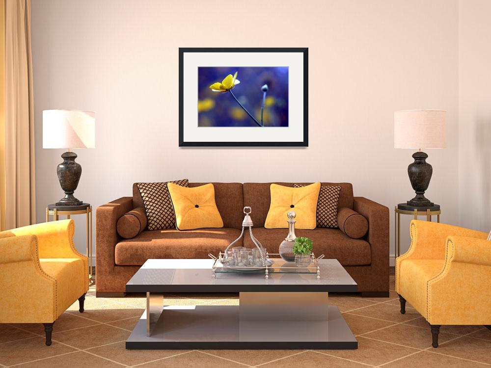 """""""Yellow  And Blue&quot  by daat_photography"""