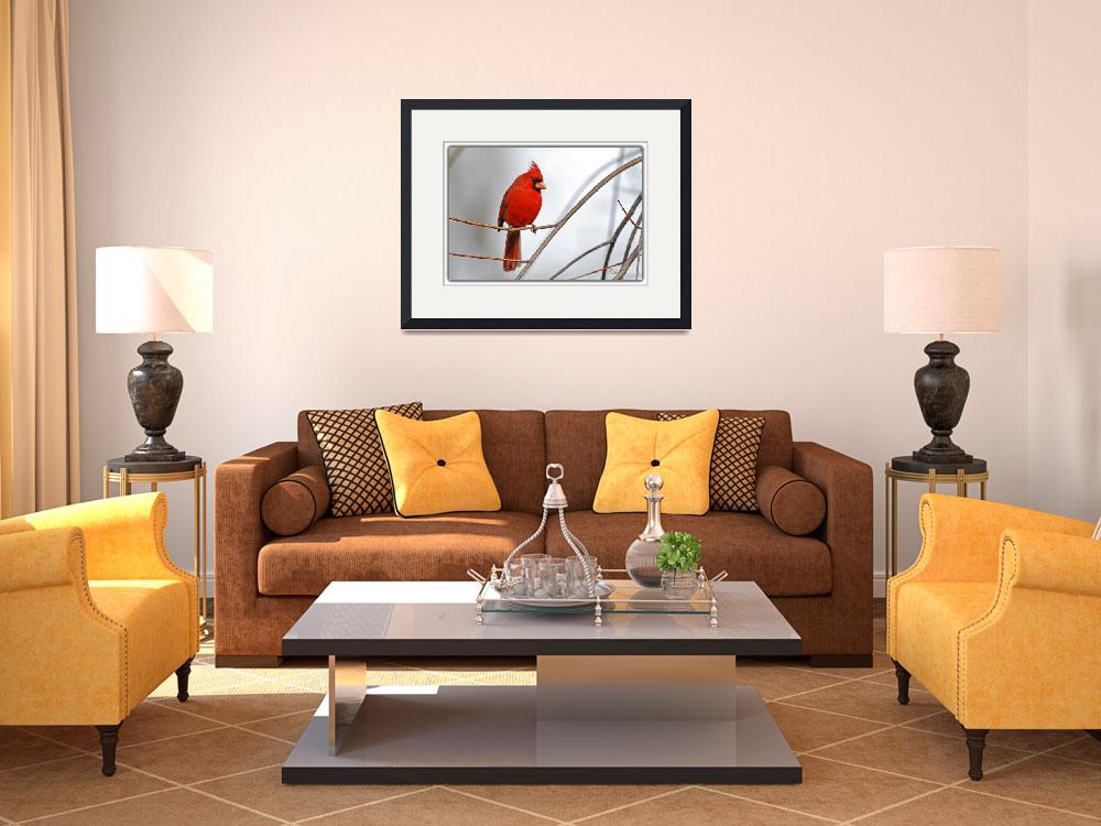 """""""Northern Cardinal -- Red & Gray&quot  by tricia"""