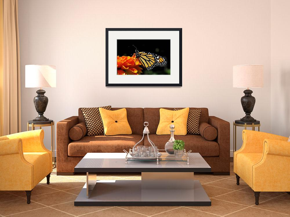 """""""Monarch Butterfly and Orange Zinnia No1&quot  (2010) by evansonart"""