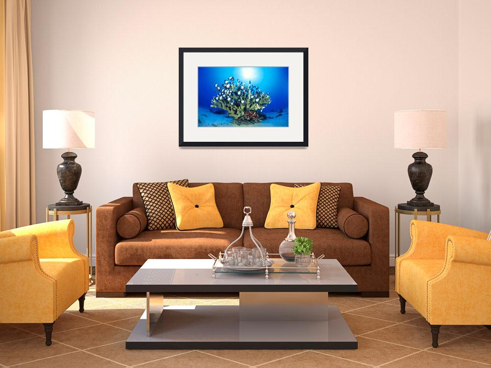 """""""Hawaiian Reef Scene With Antler Coral And Reef Fis&quot  by DesignPics"""