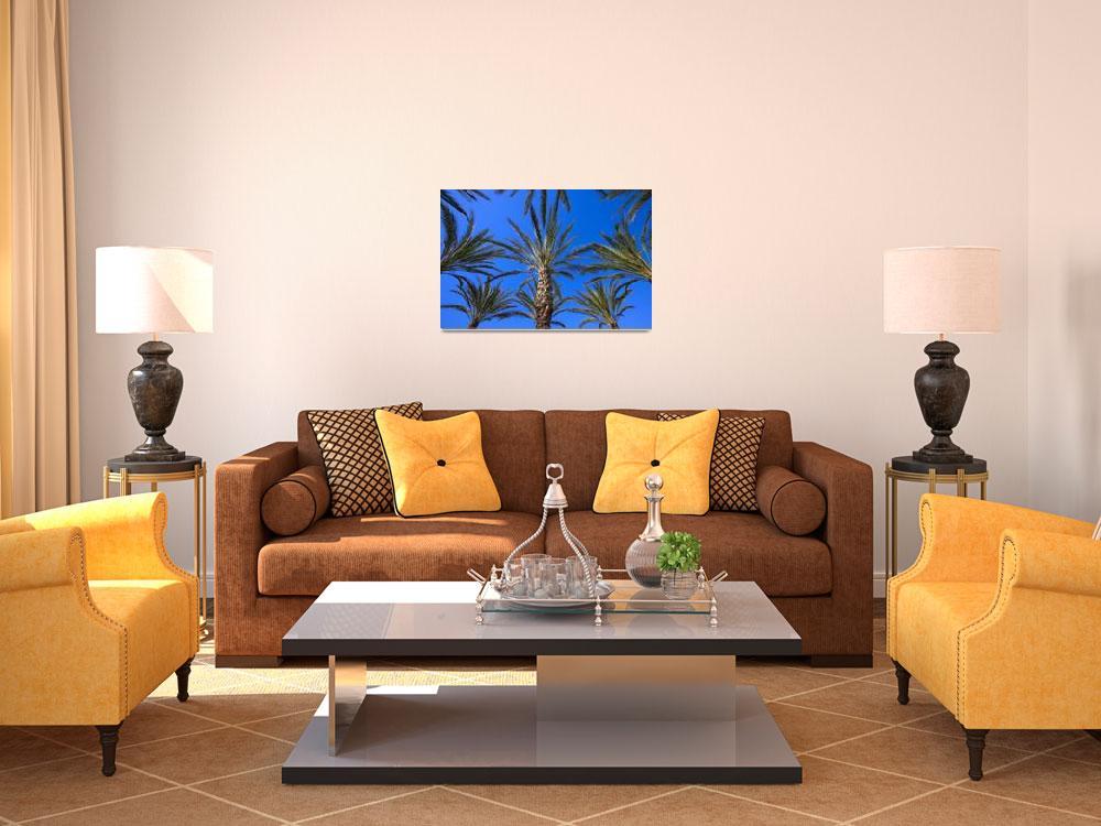 """Palm Trees&quot  by DesignPics"