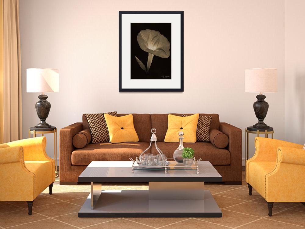 """""""442 Morning Glory  in Sepia&quot  by vitalygeyman"""