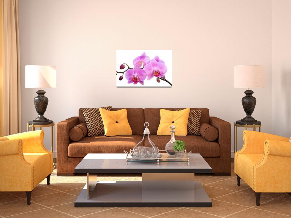 """""""Orchid Flowers II - Pink""""  (2012) by NatalieKinnear"""