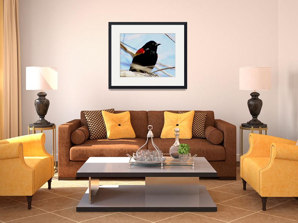 """""""Male Red Winged Blackbird""""  (2009) by rayjacque"""