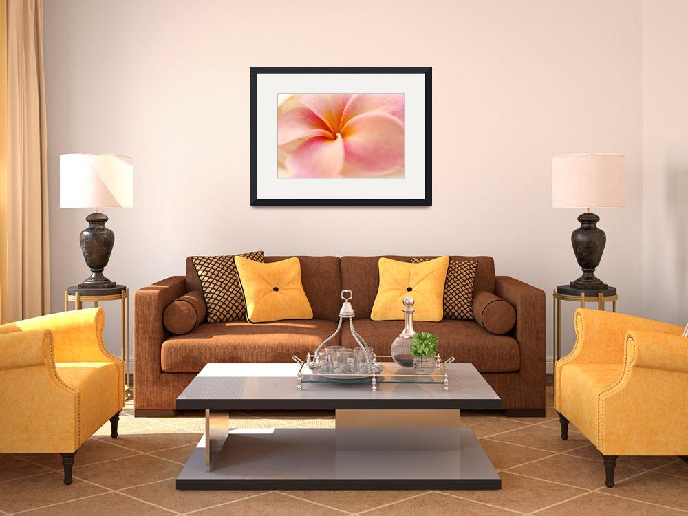 """""""Close-Up Detail Of Pink And Orange Plumeria&quot  by DesignPics"""