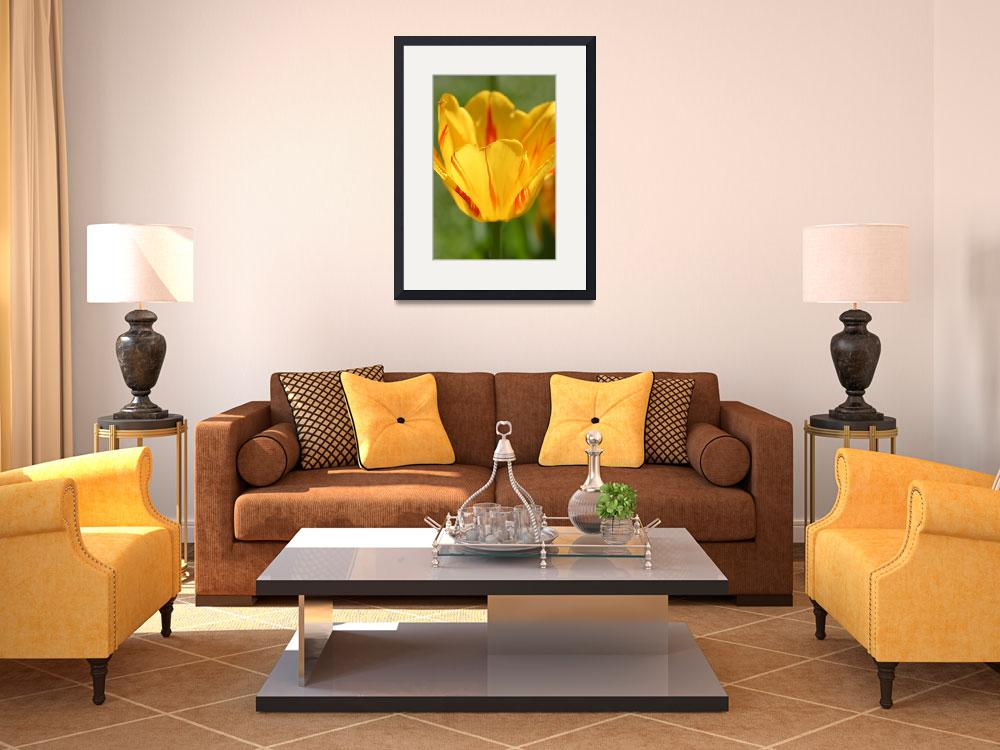 """Yellow Tulip&quot  (2010) by SharpArt"
