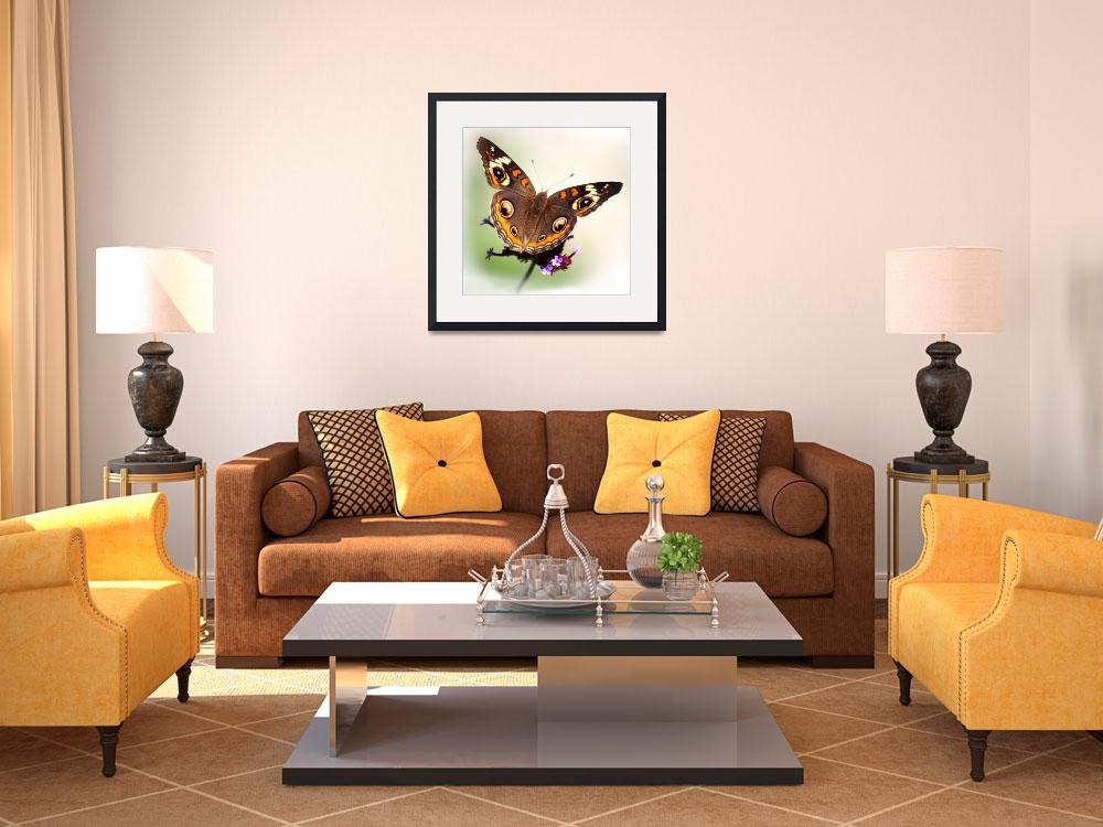 """Common Buckeye Butterfly White Vignette Square""  (2014) by KsWorldArt"