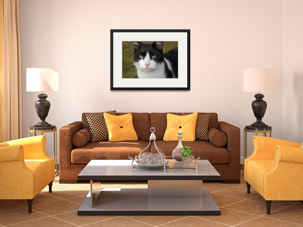 """""""Black and white cat (face)&quot  by Stocky"""