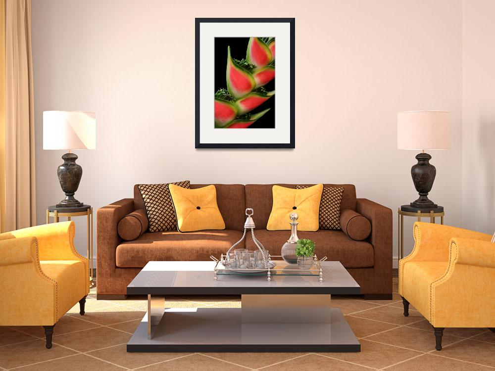 """""""Rainbow Heliconia Pink Spotted Lobster Claw&quot  (2009) by sharonmau"""