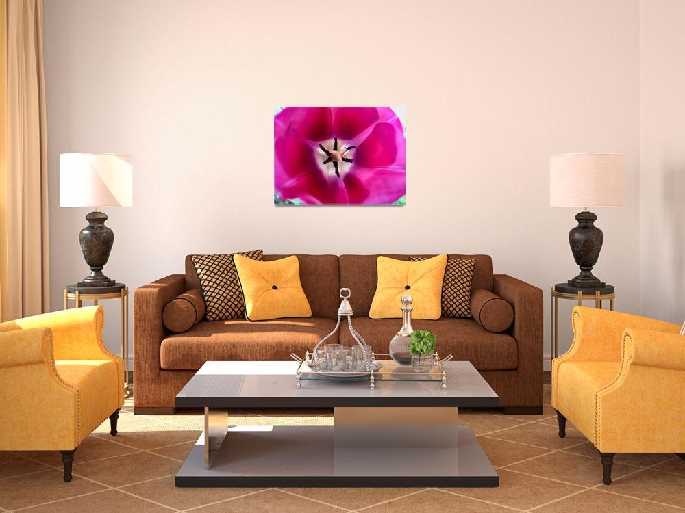 """Luminous Dark Pink Tulip Bloom w Pistil & Stamens""  by Chantal"
