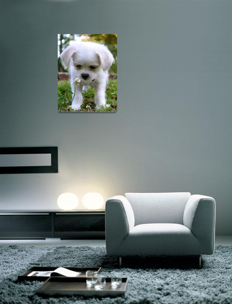 """""""Dog Meets Flower&quot  (2012) by LeyClarie"""