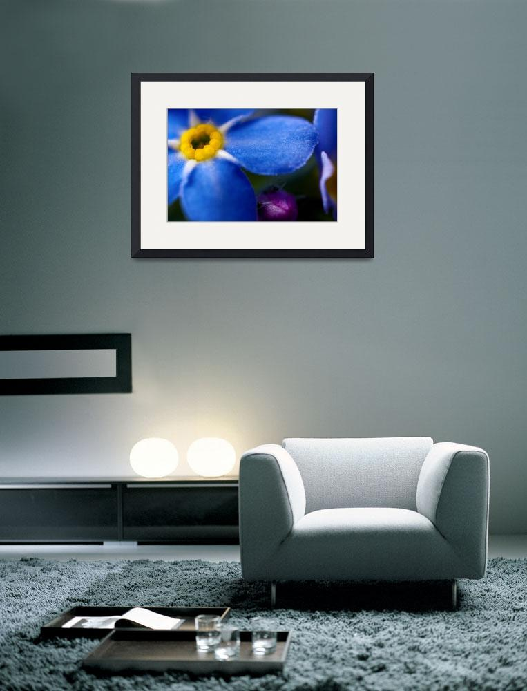 """""""SINGLE BLUE WOOD-FORGET-ME-NOT FLOWER""""  (2010) by photographybyryankelly"""