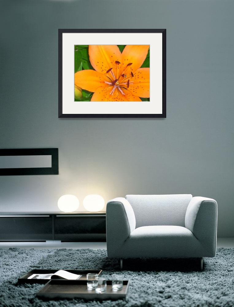 """The Lily and the Bee...&quot  (2011) by HarmonicNature"