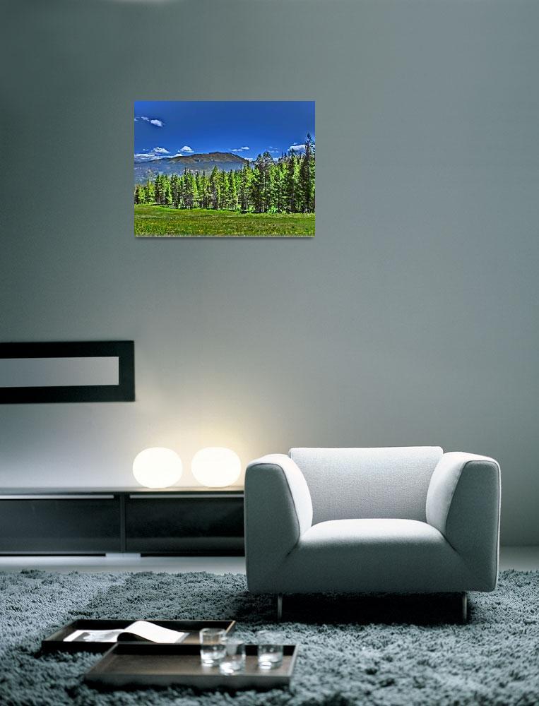 """""""Vibrant Breckenridge Colorado forest print""""  by ArtisticAttitude"""