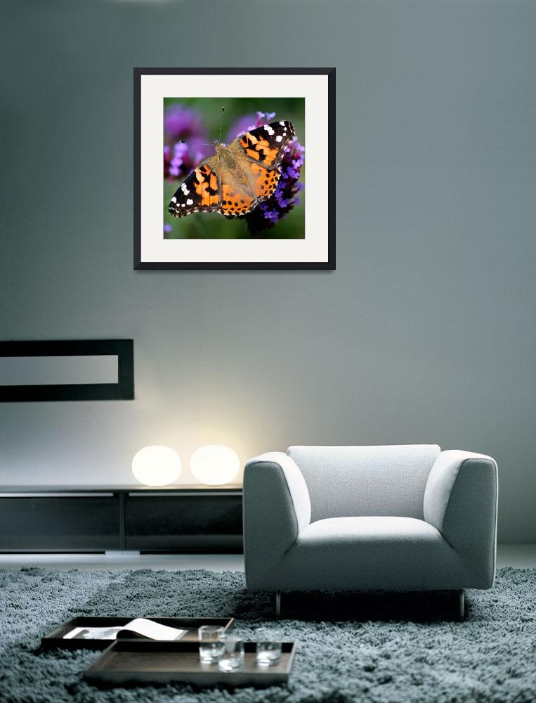"""Square American Painted Lady Butterfly""  (2013) by KsWorldArt"