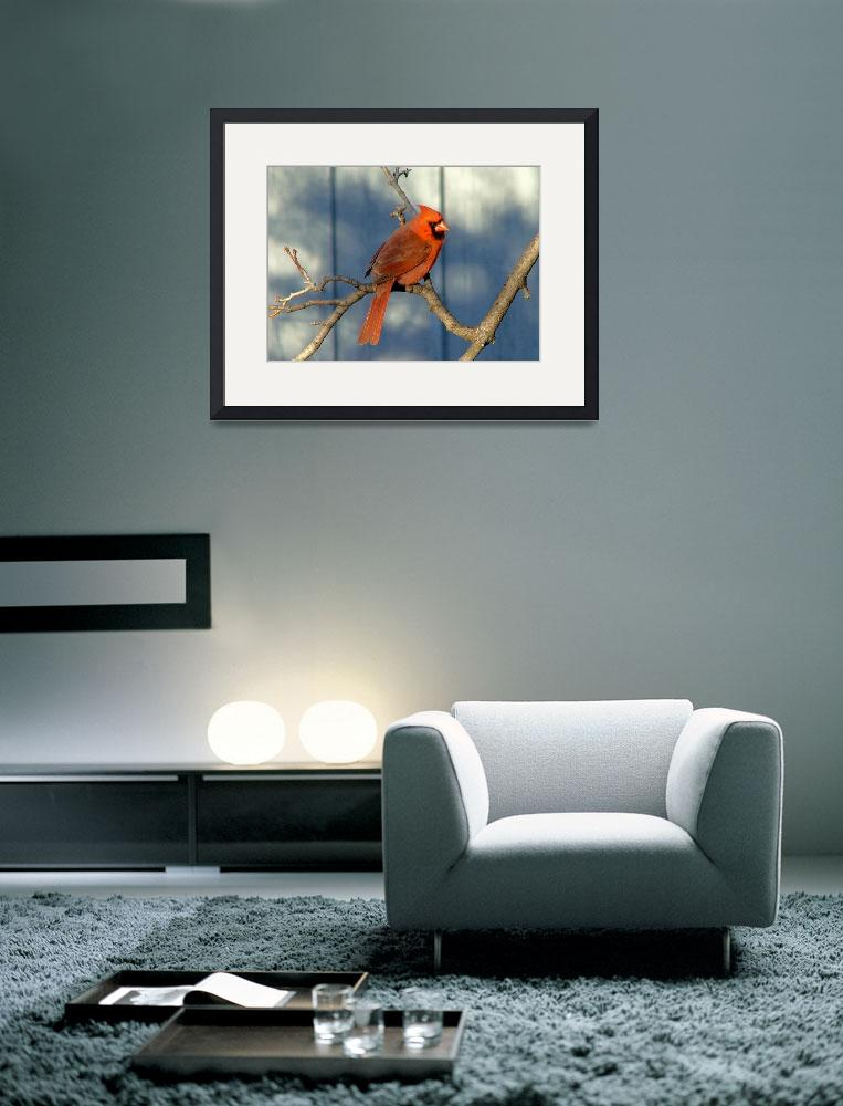 """""""Cardinal in Blue&quot  (2010) by kcam"""