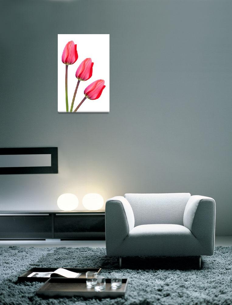 """Red Tulip Trio""  by NatalieKinnear"