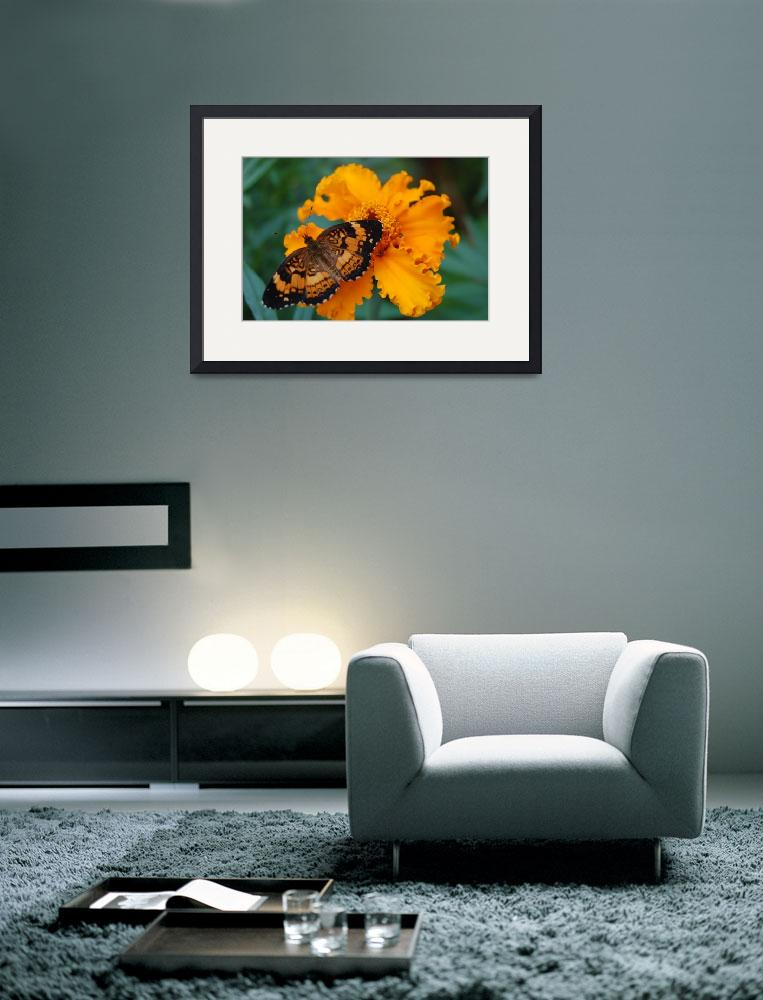 """""""Resting Butterfly&quot  (2008) by firefly99"""
