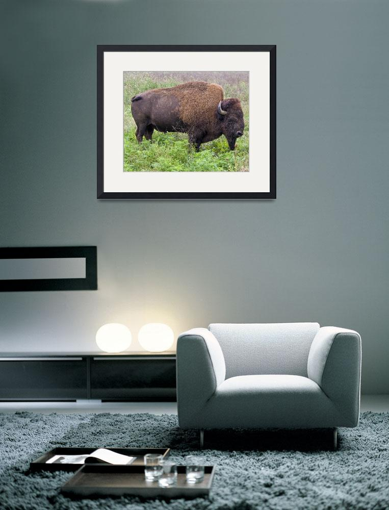 """""""American Bison (Buffalo)&quot  by JimNesterwitz"""