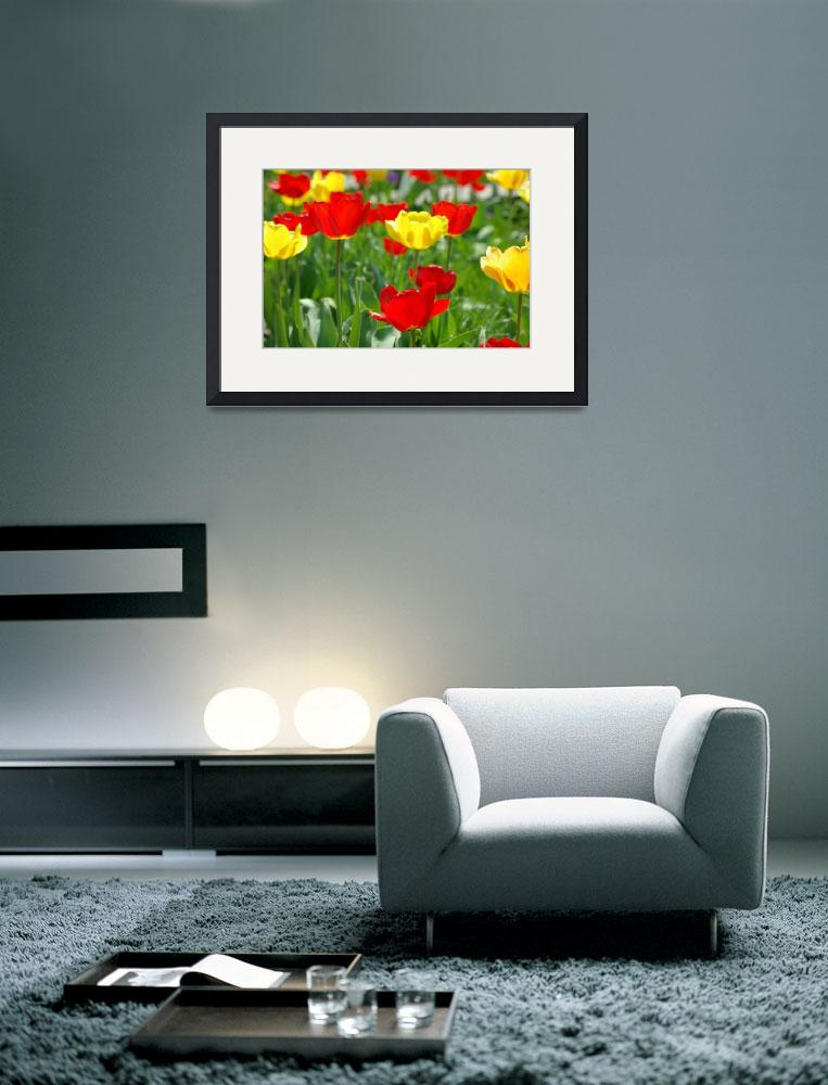 """Garden of tulips&quot  by aGinger"