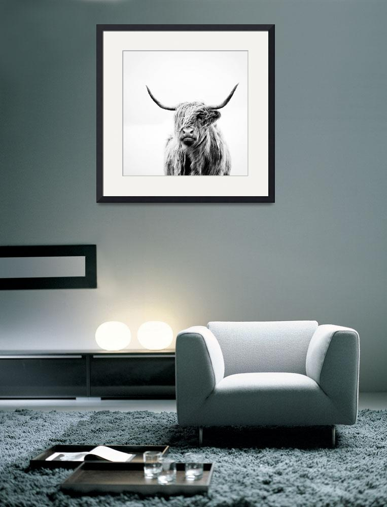 """portrait of a highland cow (square crop)&quot  (2011) by doritfuhgphotography"