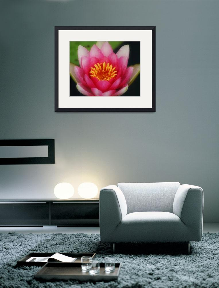 """""""Water Lily&quot  (2009) by Yellowsilk"""