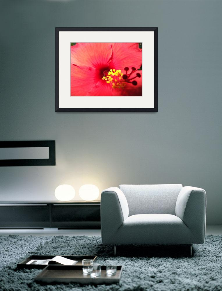 """""""California Red Hibiscus&quot  by alohalady"""