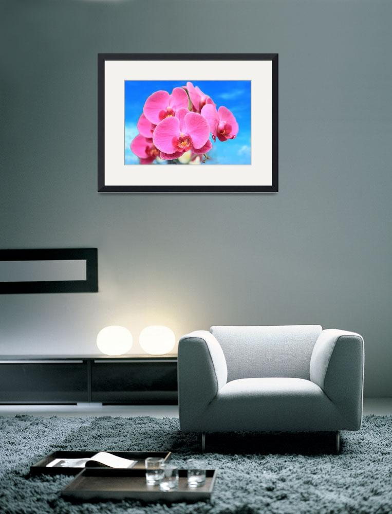 """""""Pink Orchid Blue Sky&quot  (2013) by charker"""