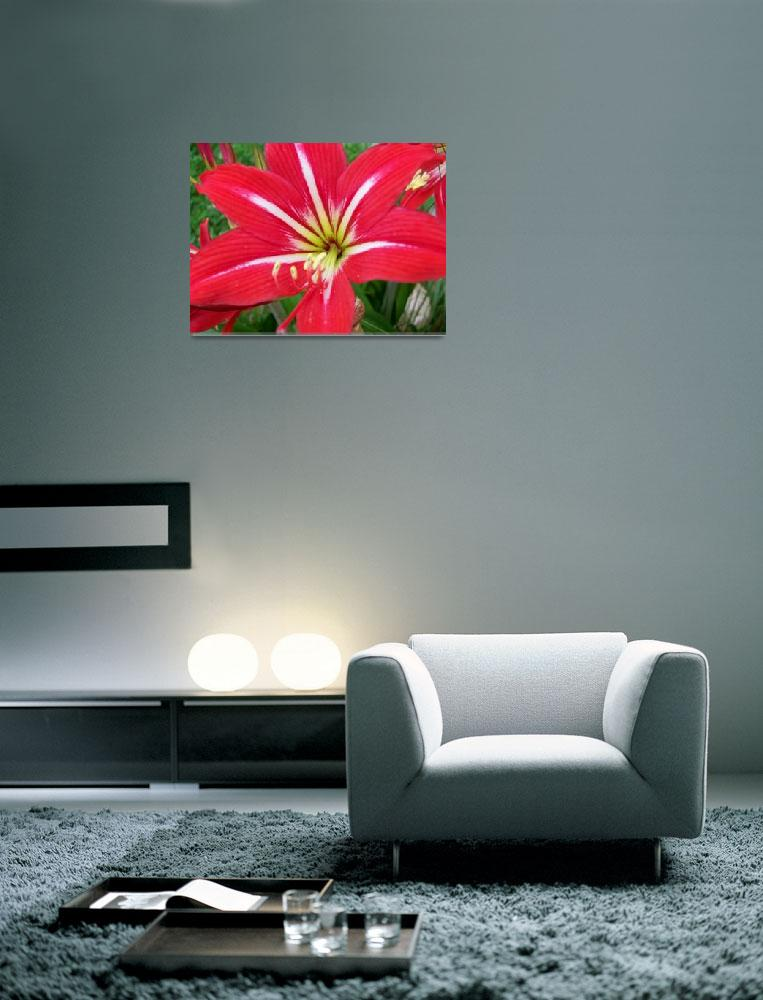 """big red flower 2""  (2009) by imagineit"