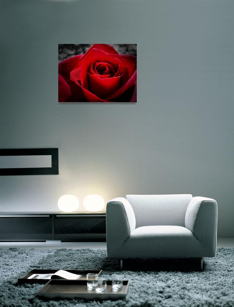 """Red in the Rose&quot  (2008) by bchrisdesigns"
