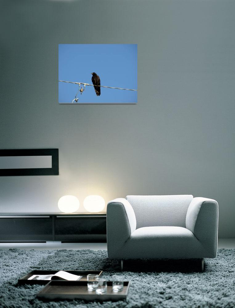 """""""Black crow&quot  (2009) by Albertphoto"""