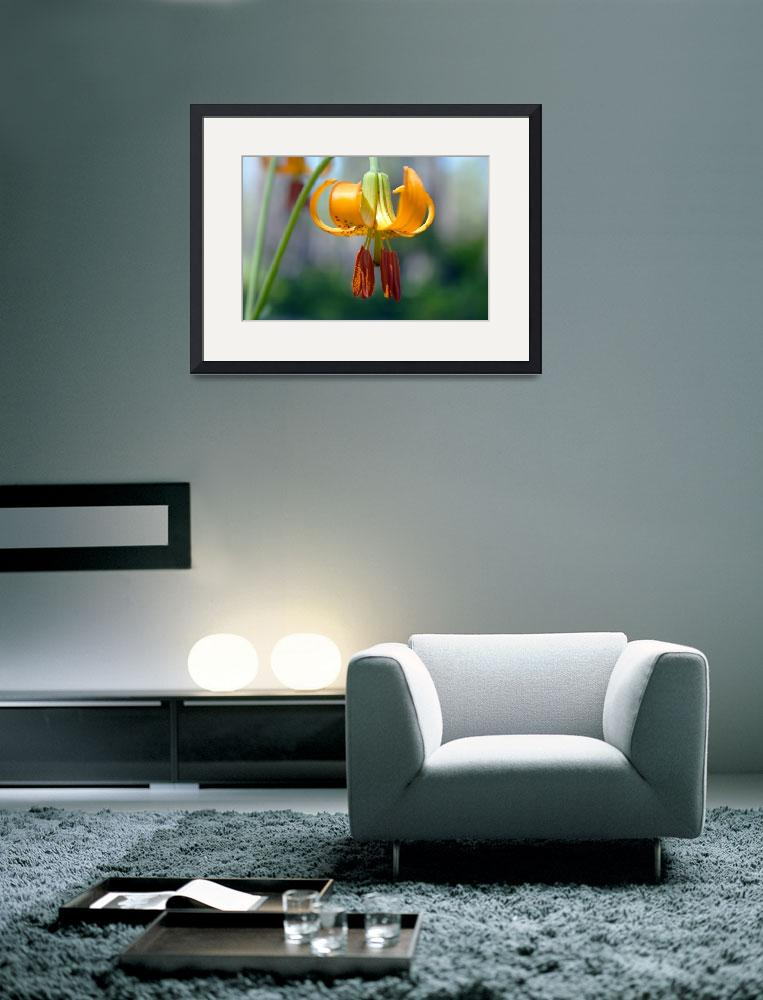 """""""Tiger Lily III""""  (2011) by exploregonian"""