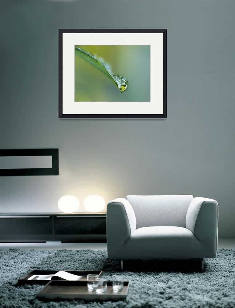 """""""Close Up Of Water Drop On Leaf&quot  by DesignPics"""