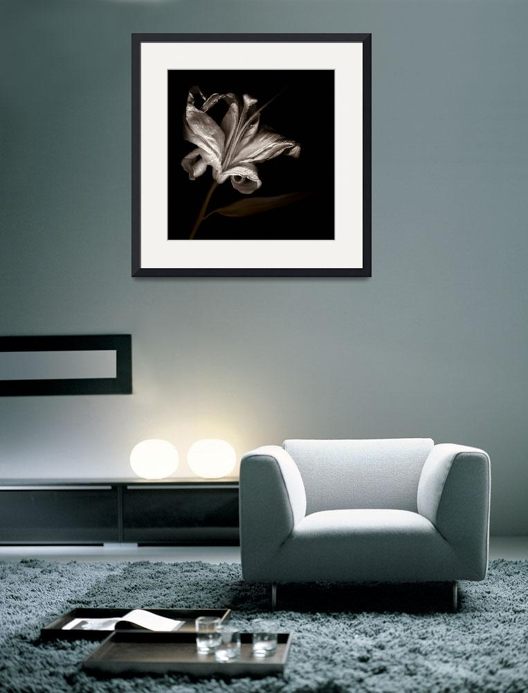 """""""The Lily Dies&quot  (2008) by dawnleblanc"""