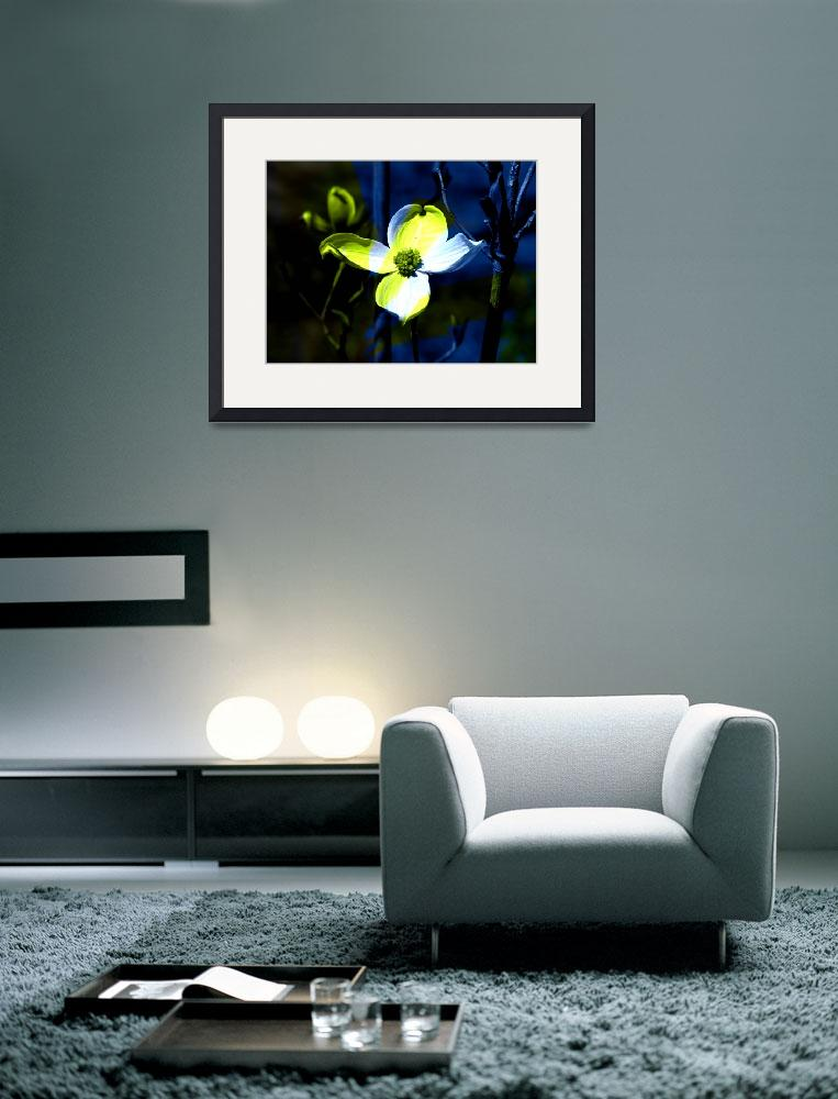 """""""Single Yellow and White Dogwood Blossom""""  (2009) by DBGCreations"""