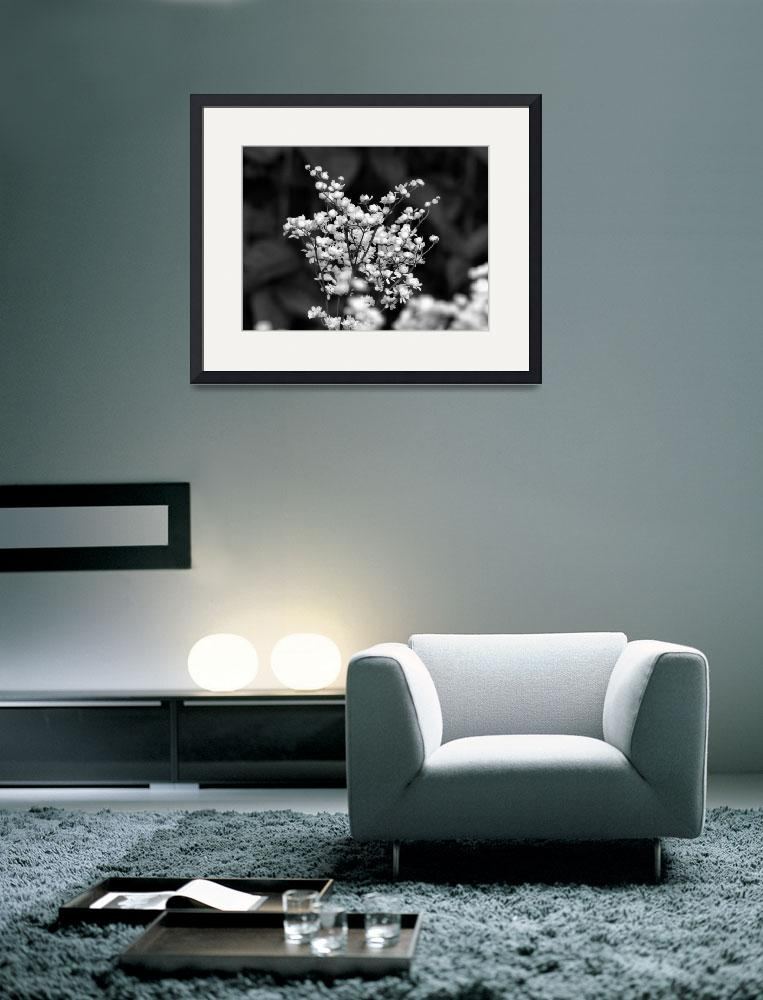 """Flower 003aBW Black and White Gray Scale&quot  (2010) by Ricardos"