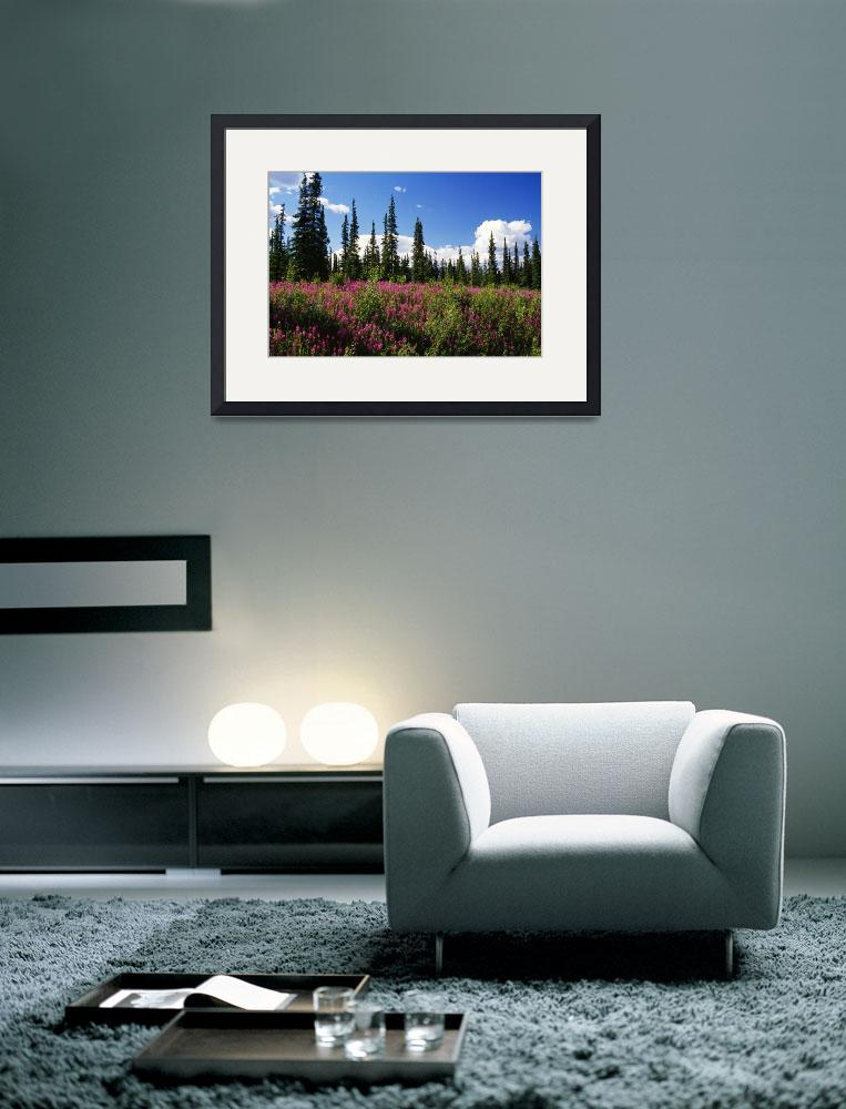 """""""Pink fireweed flowers blooming in forest clearing&quot  by Panoramic_Images"""
