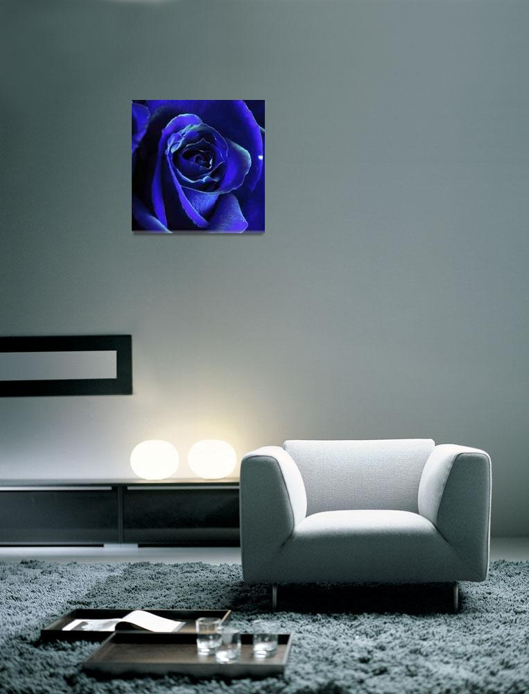 """""""Rose In Blue&quot  (2009) by ldfranklin"""
