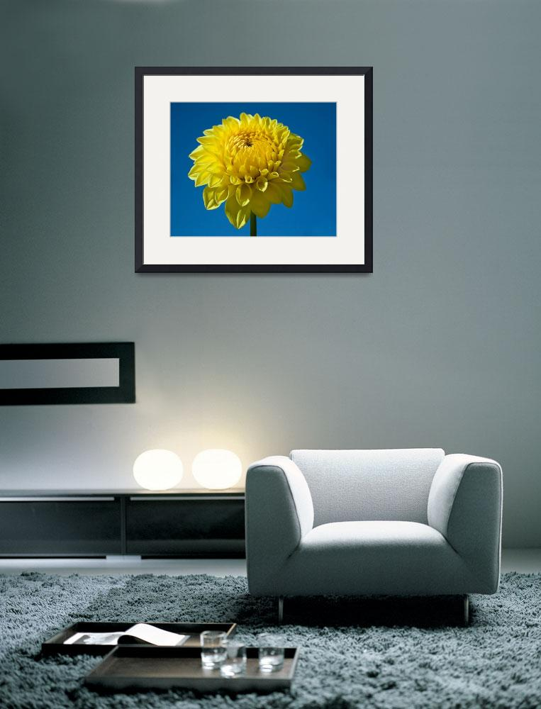 """Yellow Dahlia and Blue Sky&quot  (2009) by staceylynnpayne"