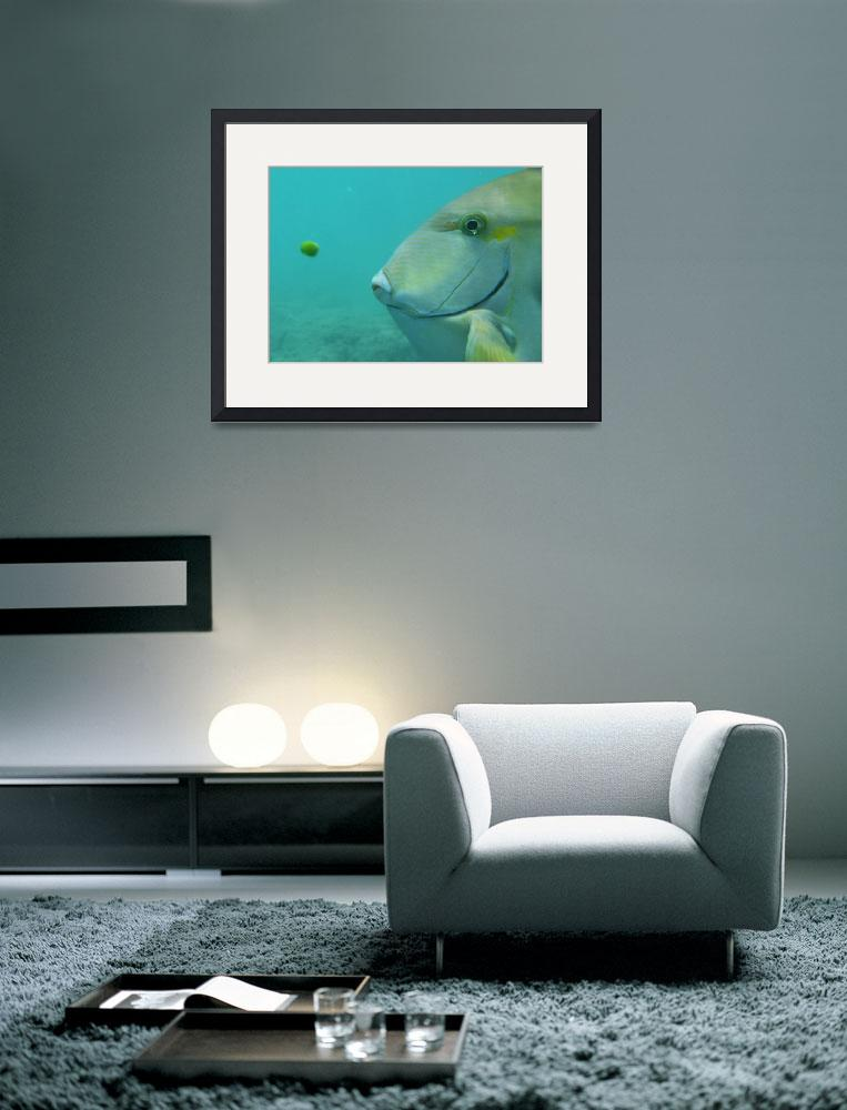 """""""The fish and the Pea&quot  (2009) by michaeldcook"""