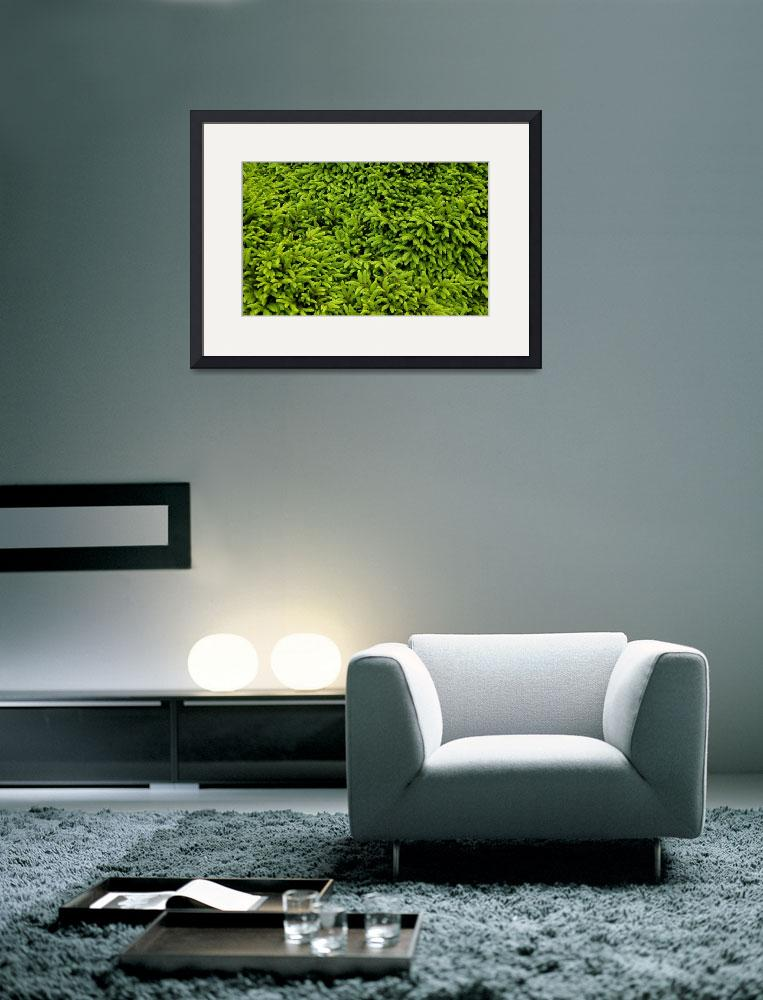 """""""Hedge at Botanics&quot  (2008) by dave_finlayson"""
