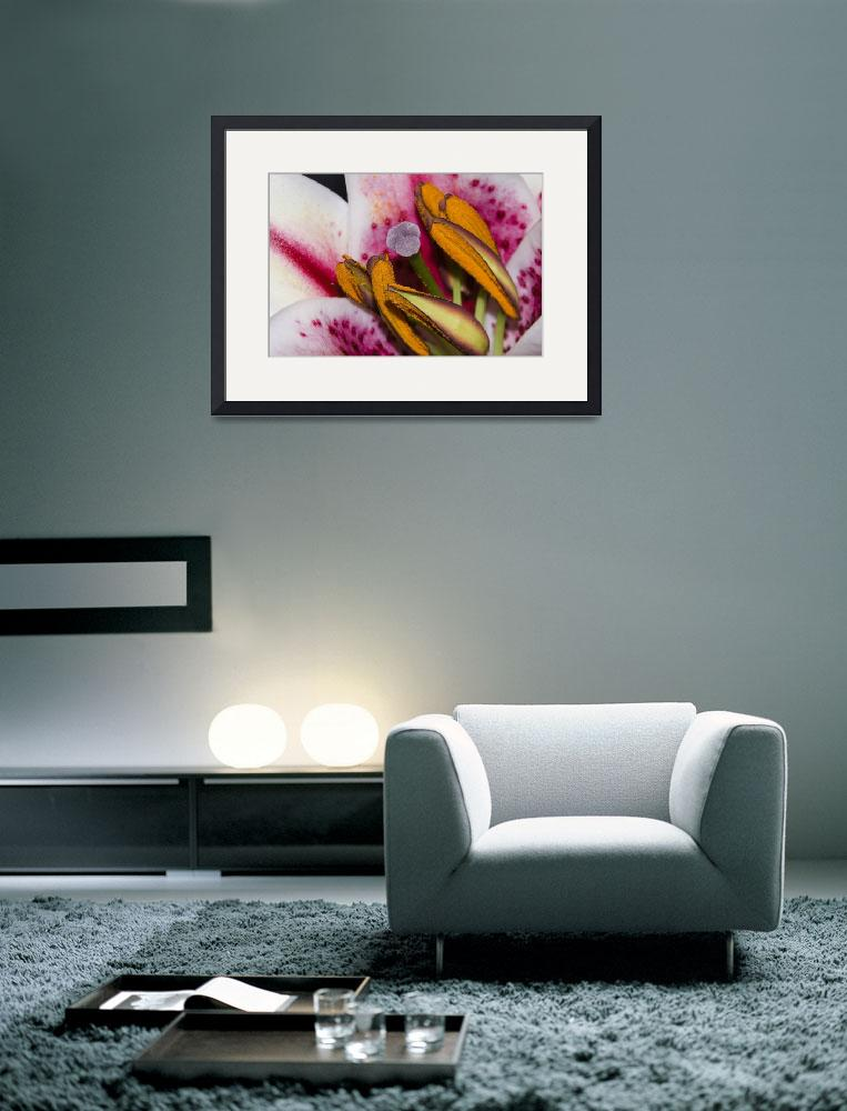 """""""Macro Lily&quot  (2009) by kcline"""