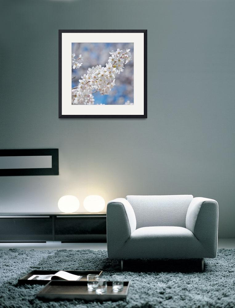 """""""Pure White&quot  (2011) by ImageArt-Photography"""