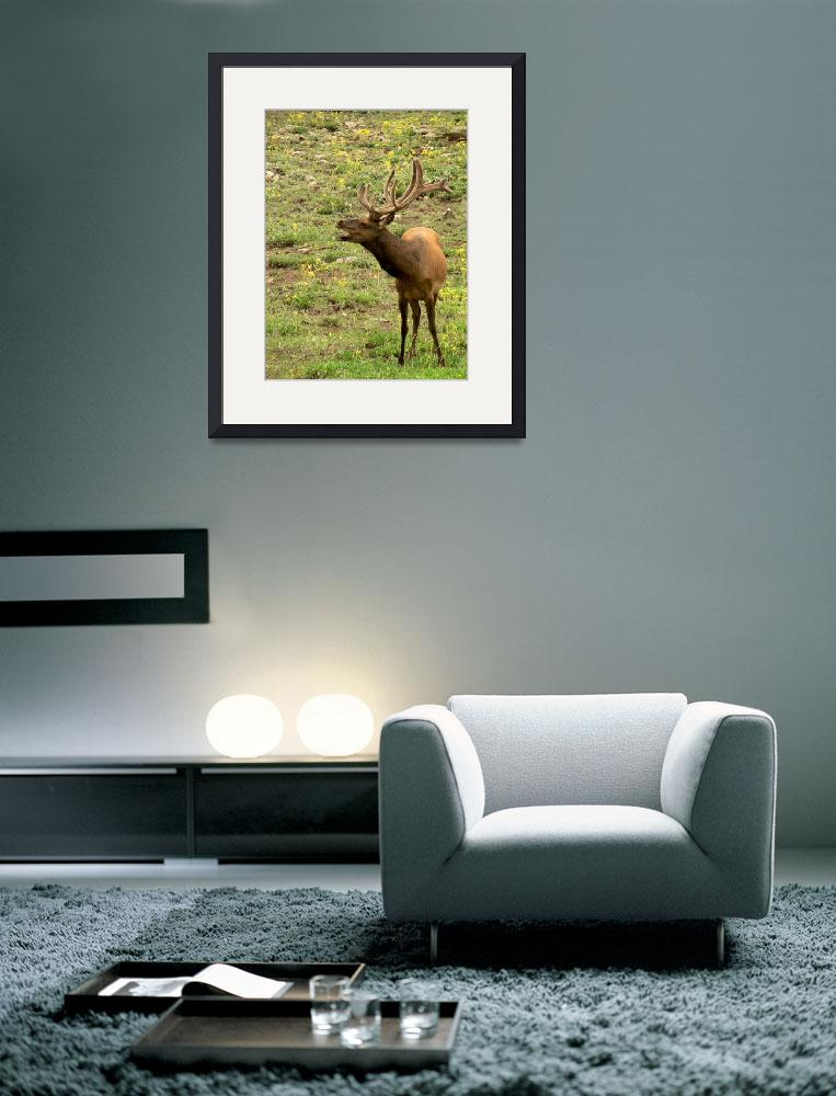 """""""Talking Elk  P1100258""""  (2010) by rayjacque"""