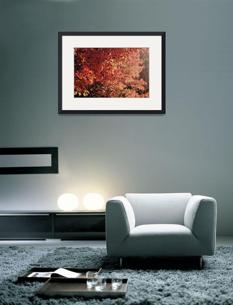 """""""Autumn colored leaves in the sunset light""""  (2008) by hideakisakurai"""