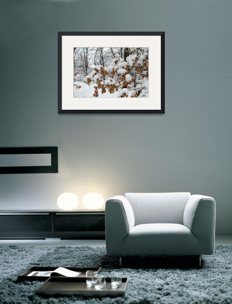 """""""Winter wood.Snow capes.586""""  (2006) by milashale"""